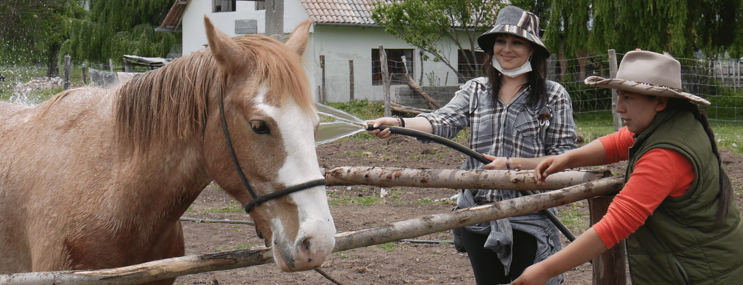 Volunteer with Horses Peru