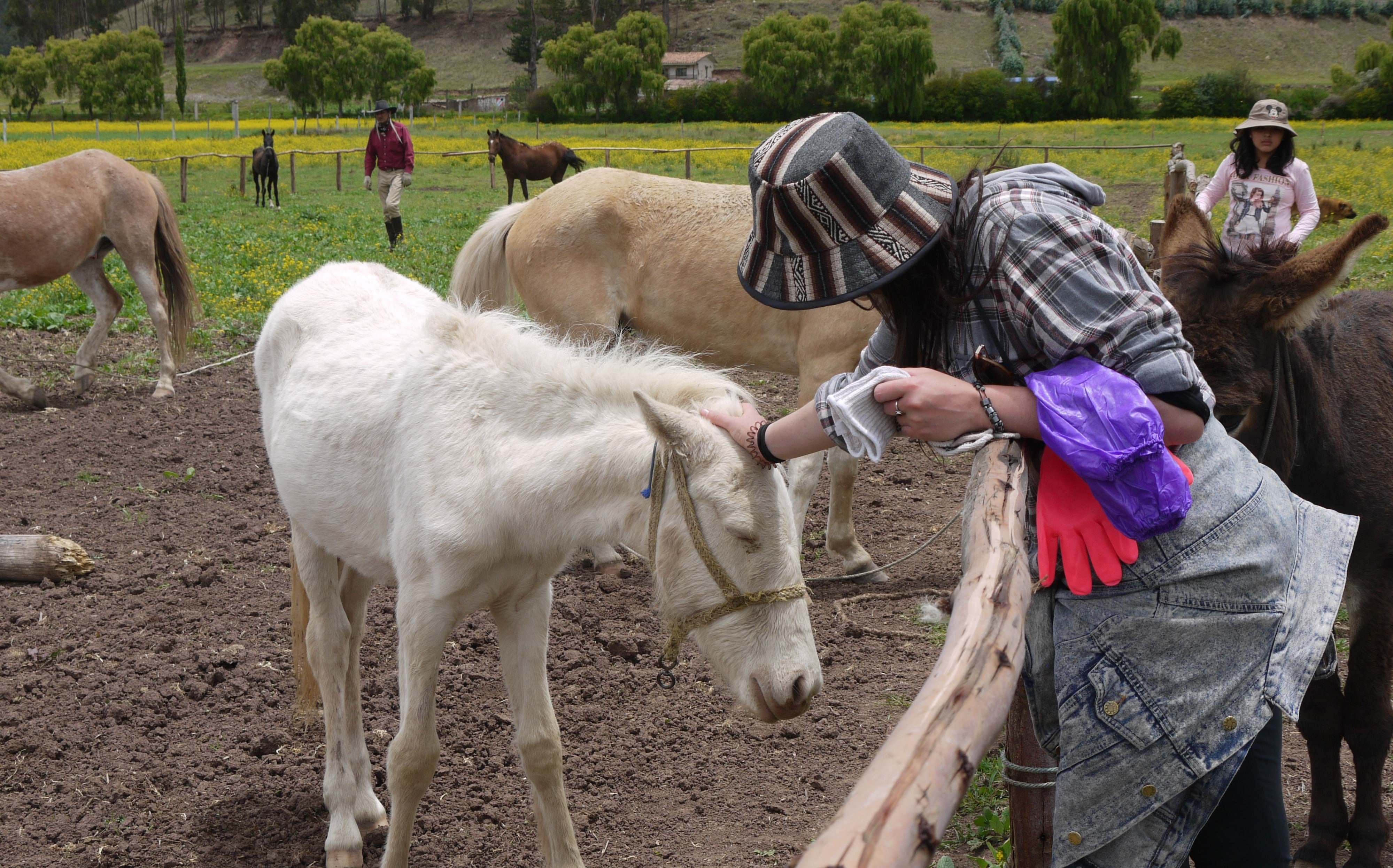 Volunteer meeting Rescued Horse at Horse Sanctuary