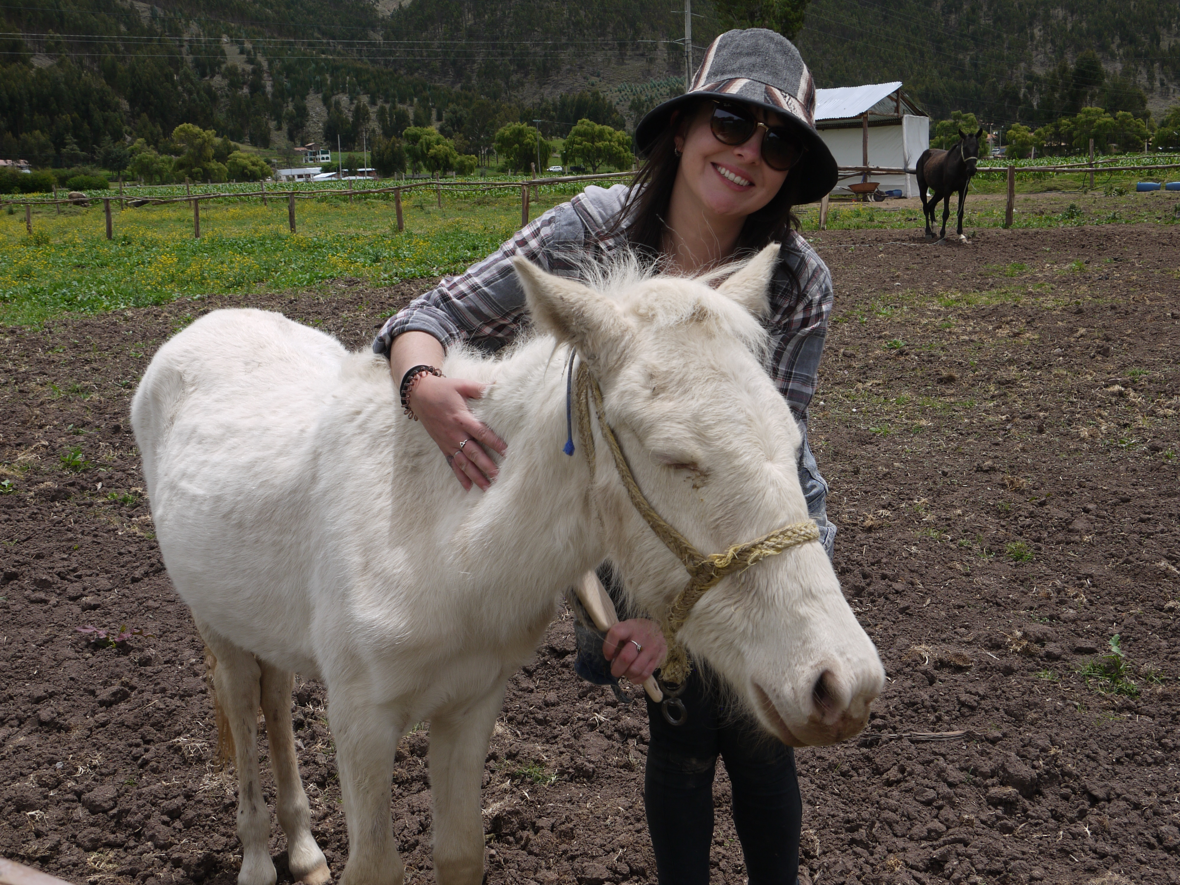 Volunteer with Horse at Horse Sanctuary