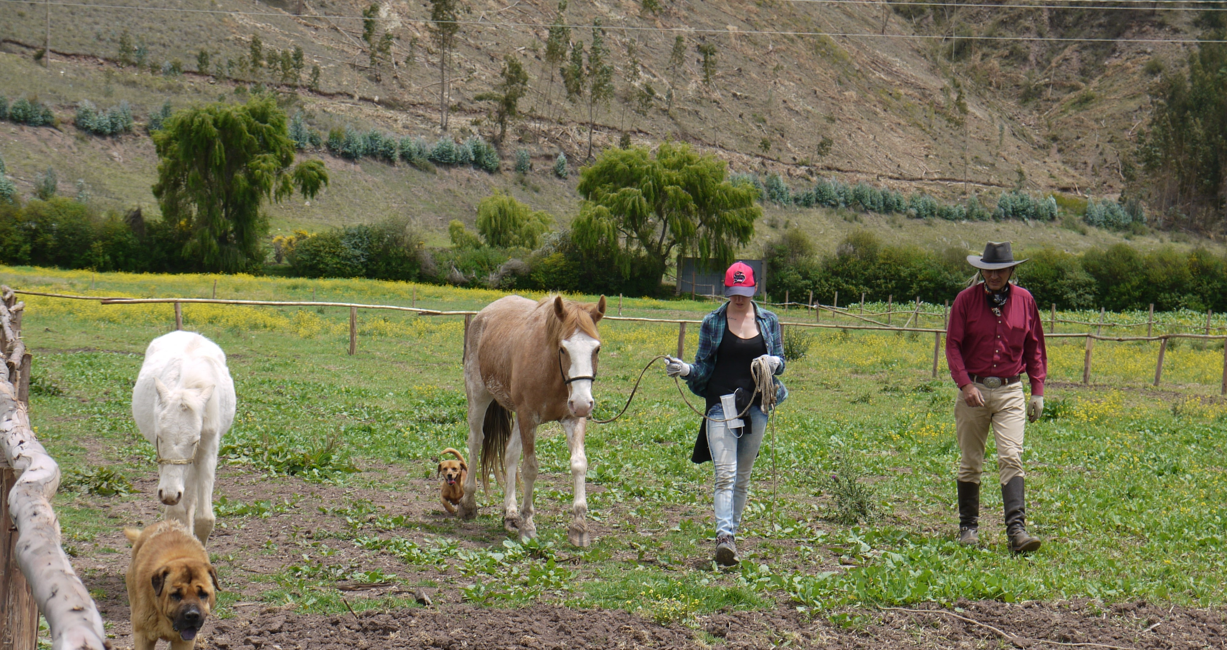 Volunteer walking horse