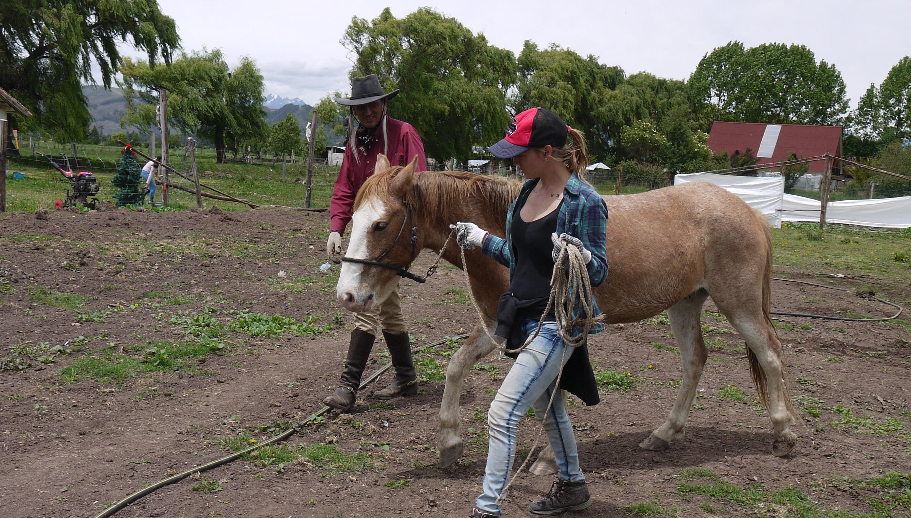 Horse Sanctuary Volunteer