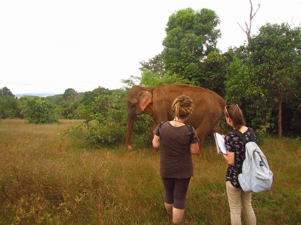 Volunteers monitoring the elephants