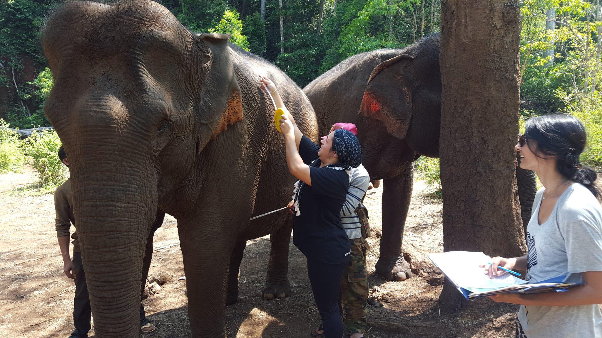 Elephant checks at the sanctuary