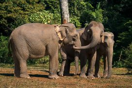 Small elephant herd at the sanctuary