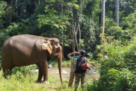 Volunteer with Rescued Elephants Overseas