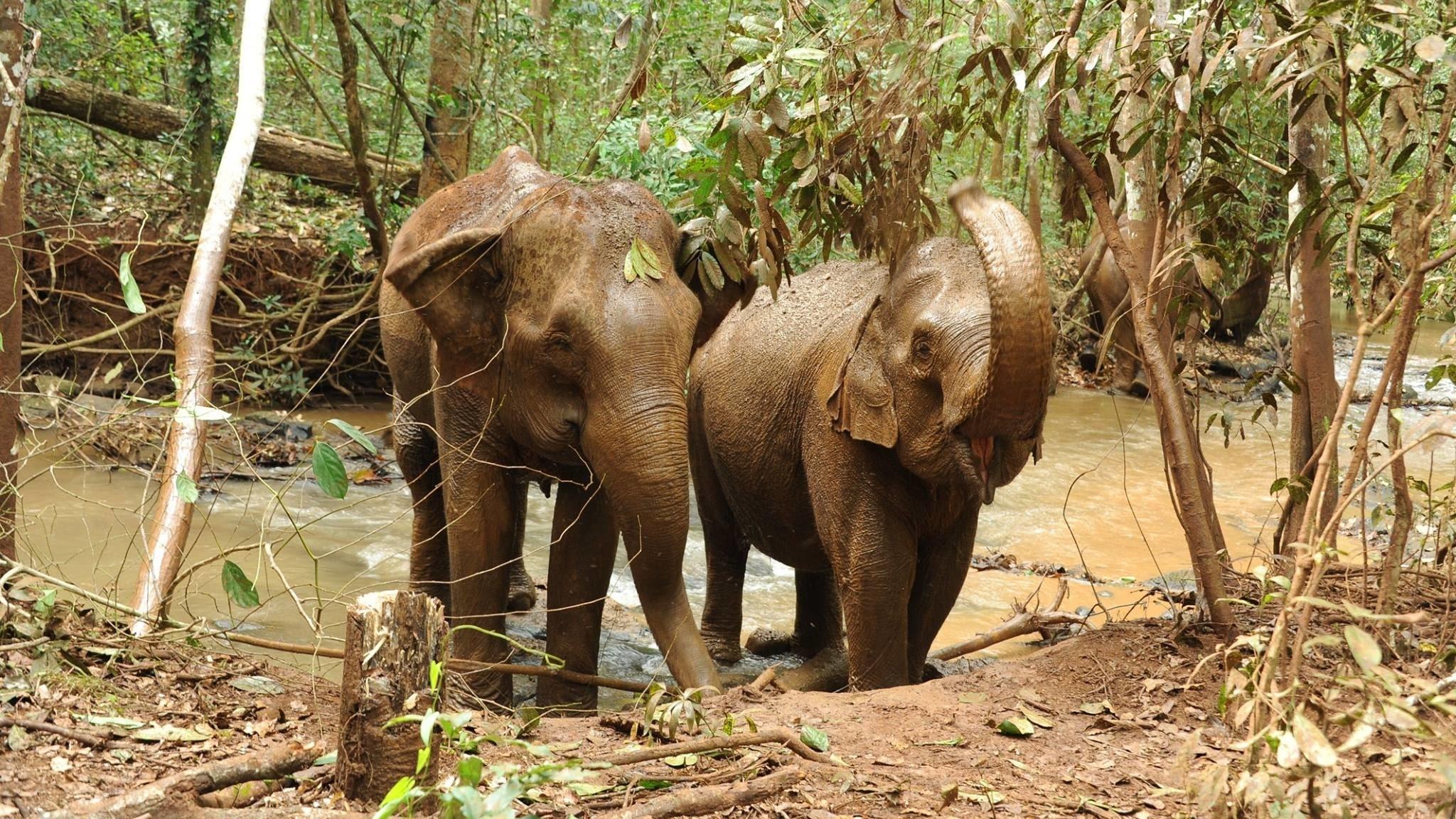 Elephant fun in the mud