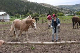 Volunteer at the Horse Project