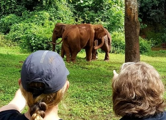 Volunteer with Elephants Internationally