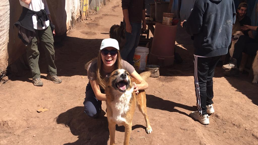 Volunteer with Rescued Dogs Abroad