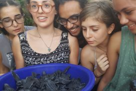 Turtle hatchlings ready for release to ocean Costa Rica