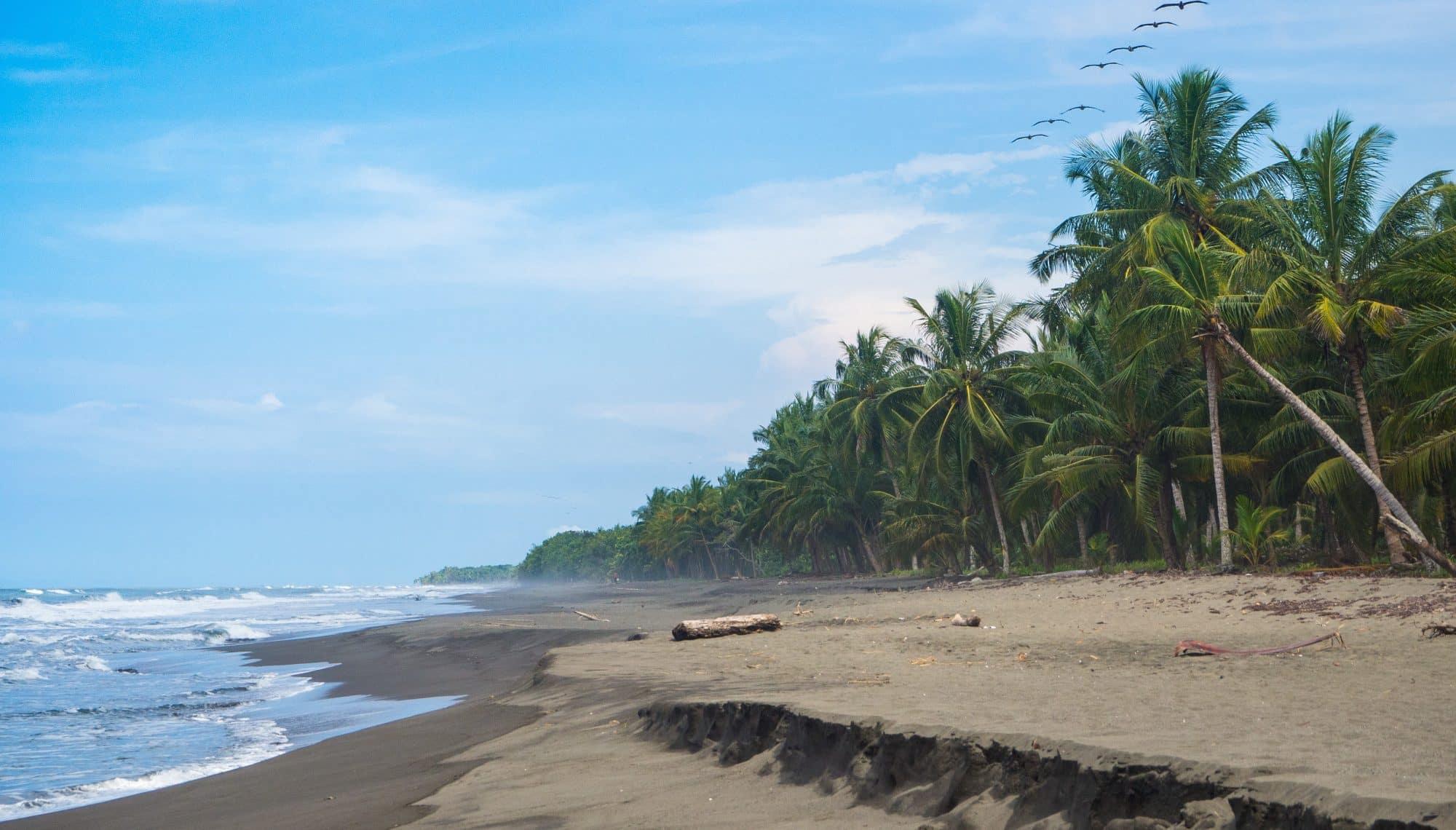 Save Sea Turtles on Costa Rica's Caribbean Coast