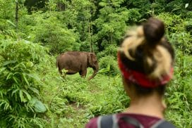 Visit the Elephant as an Intern in Cambodia