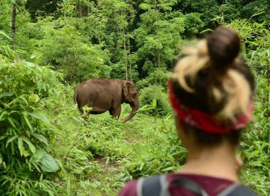 Volunteer to help elephants