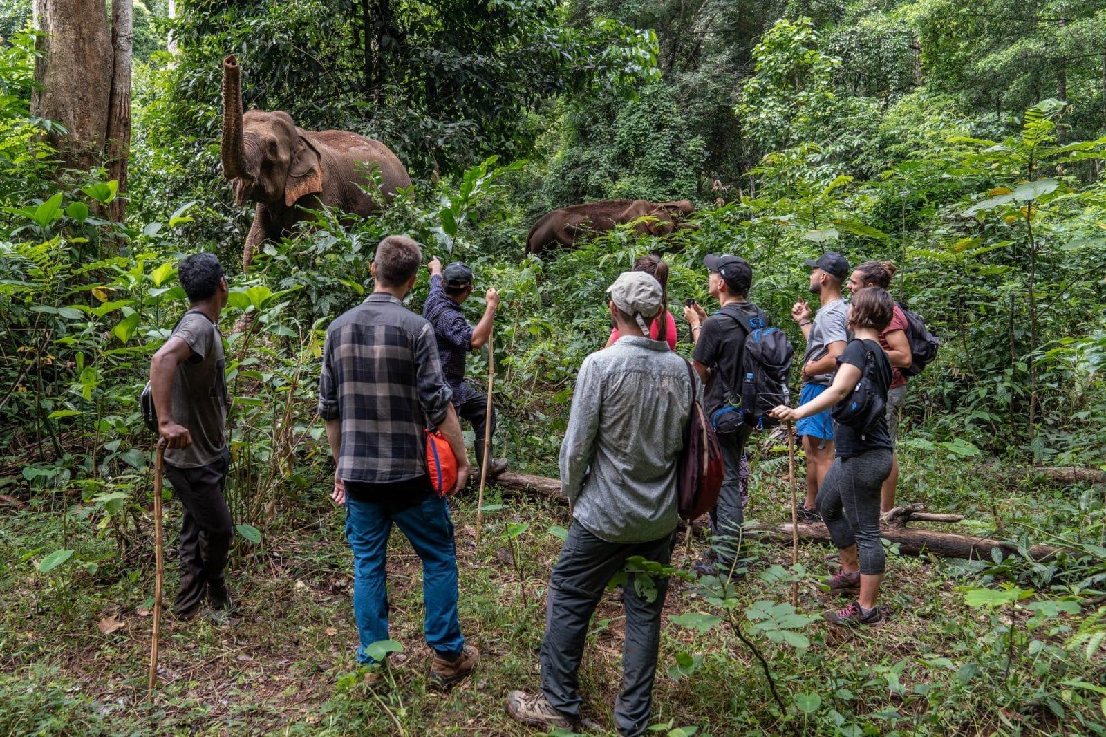 Volunteers observing the elephants