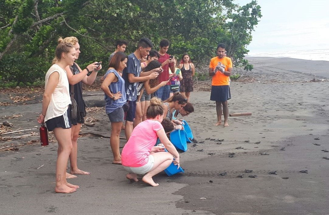 Save Sea Turtles Costa Rica