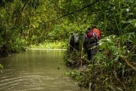 Head into the Jungle for a Digital Detox