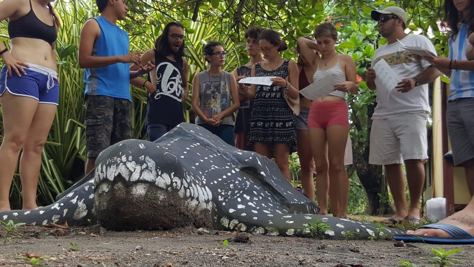 Sea Turtle Conservation in Costa Rica