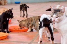 Stray cat - Animal Rescue Cambodia