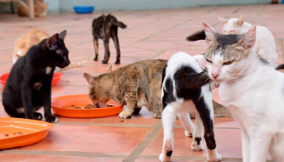 Volunteer to Help Care for Rescued Animals in Cambodia