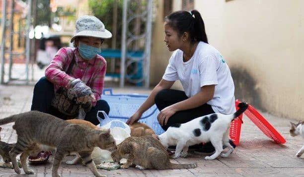Cambodia Cat and Dog Volunteering