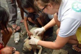 Animal Rescue Cambodia's abassadog Henry