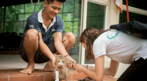 Help Care for Rescued Cats and Dogs Cambodia