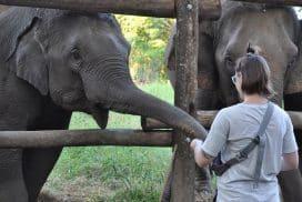 Volunteer with Elephants as a young volunteer