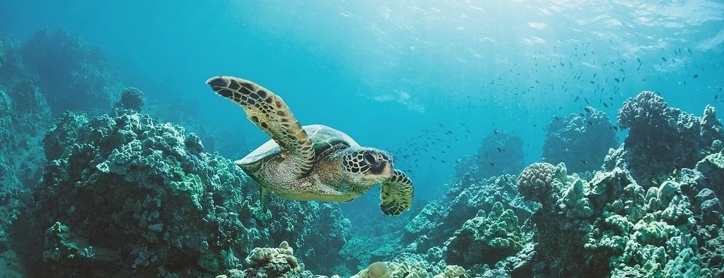 Sea Turtle Conservation Slider 1