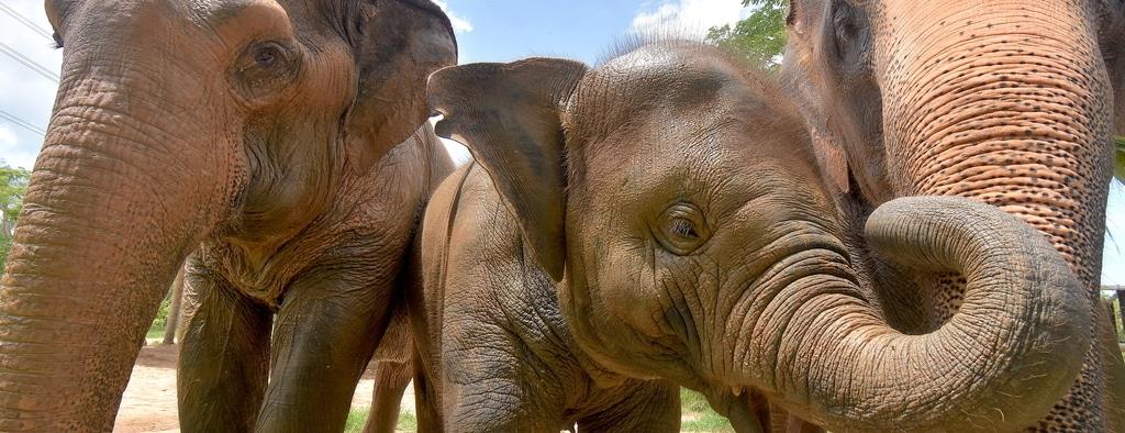 Volunteer with Elephants Thailand