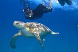 Protecting sea turtles in malaysia