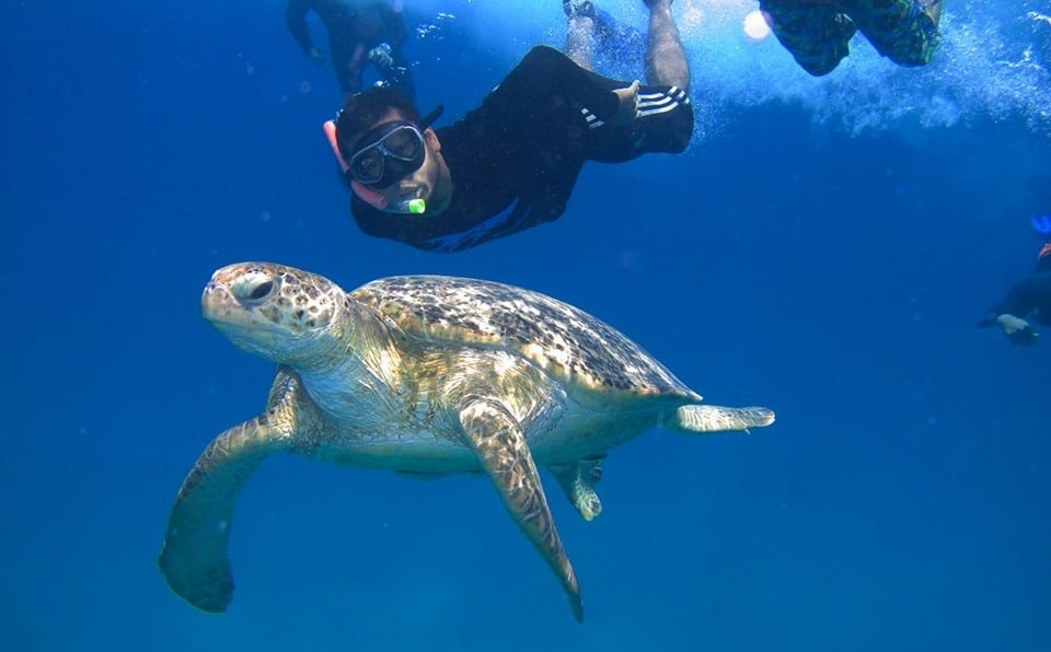 Volunteer Sea Turtle Conservation Malaysia