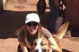 Intern at dog shelter