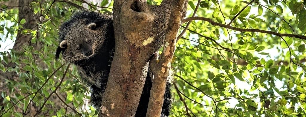 Laos Wildlife