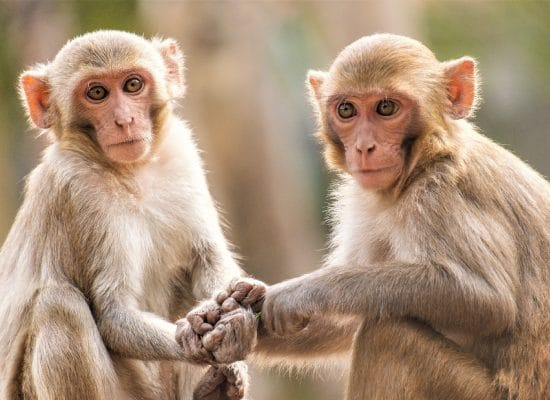 Volunteer abroad to help animals