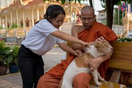 Animal Rescue Cambodia at a pagoda