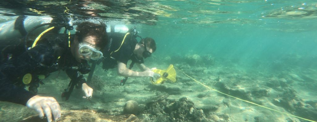 Volunteers helping with diving surveys in Malaysia