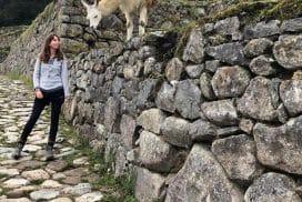 Intern and Alpaca