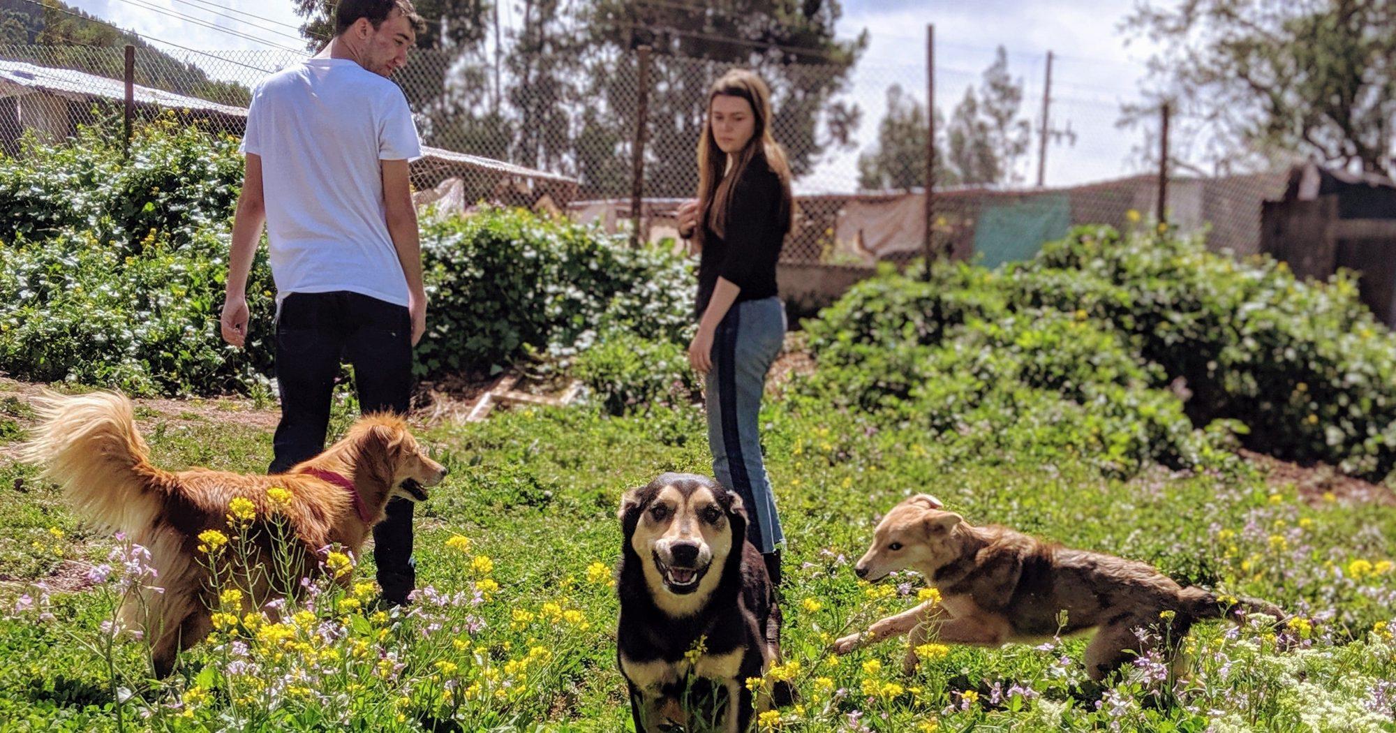 Peru dog shelter