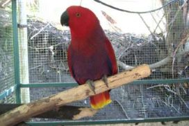 Parrot rescued from wildlife trafficking living a safe life at wildlife sanctuary