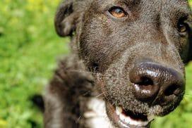 happy dog cusco peru