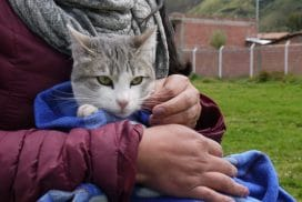 providing free health care for cats and dogs in Cusco Peru