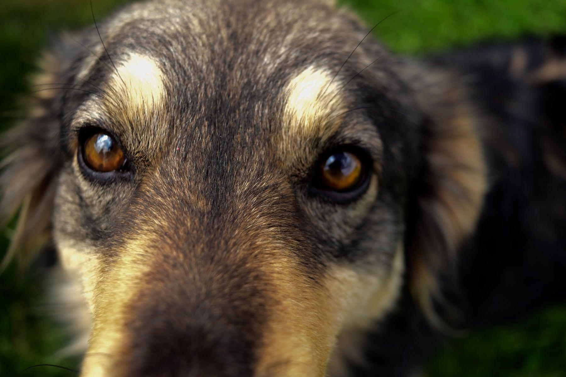 The Five Freedoms - Animal Welfare
